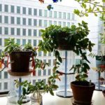 Hydroponic Systems: Why Is It Not Performing as Well as It Should?