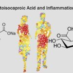 Effects of Ketoisocaproic Acid and Inflammation in Glucose