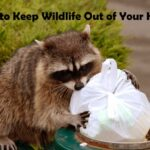 How to Keep Wildlife Out of Your Home